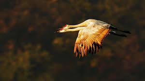 bird photography simplified ebook