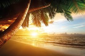 sandy beach at sunset photo wallpaper paradise with palm trees sandy beach at sunset wall decoration paradise palm trees ocean muralbeach motiv xxl wallpaper by great art 55 inch x 394 inch continue to the product at