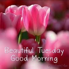 best 25 greetings ideas on greeting cards best 25 tuesday greetings ideas on happy tuesday