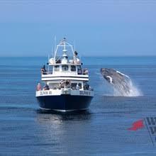 Whale Watches Cape Cod - dolphin fleet whale watch cape cod a list
