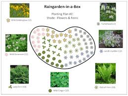 native plants for shade raingarden in a box designs prior lake spring lake watershed