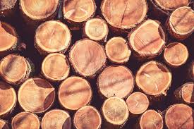 tree rings used to counter smugglers rings