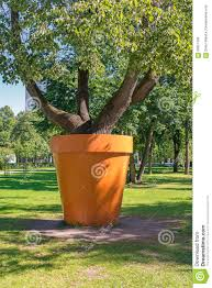 tree in the tub stock photo image of outdoor environment 58651168