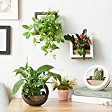 amazon com hanging wall planter for succulents herbs or indoor