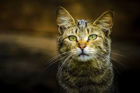 do feral cats spread disease howstuffworks