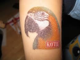 blue and gold macaw tattoo raymie u0027s zoo