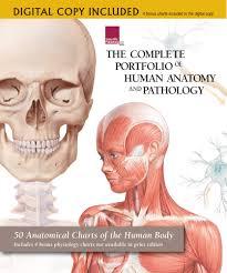 Nose Anatomy And Physiology The Complete Portfolio Of Human Anatomy And Pathology U2013 Digital
