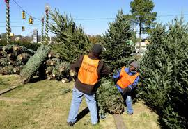 live tree price up marvin s walmart home depot