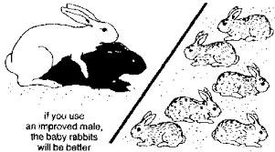 learning rabbits