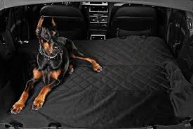 protection siege auto chien achats