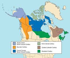 Alaska Records Search Alaska Yukon Barren Ground Caribou Big Records