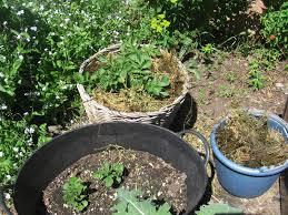 bb u0027s bountiful backyard potato update