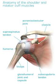 Tendons In The Shoulder Diagram Rotator Cuff Tear Dr Marc Beauchamp Surgeon Orthopedist