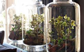 terrariums beautiful enclosed gardens you can build at home