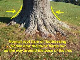 when a tree goes joshua claybourn