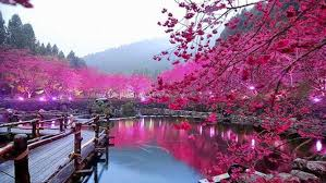pink color images pink hd wallpaper and background photos 10579442 pink color lake trees bridge hd wallpaper 000213 wallpapers13 com