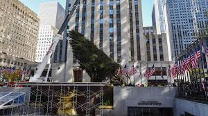 rockefeller center tree arrives in new york from pa