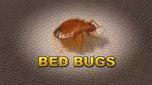 Harris Bed Bug Killer Reviews Harris Tv Spot Bed Bug Control Stop Bed Bug Bites Youtube