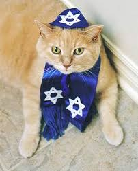 chanukah hat 32 best hanukkah cats images on cats kittens and kitten