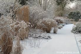 great plants for winter structure knoll gardens ornamental