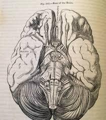 under your skin the anatomy artwork of h v carter u2013 dittrick