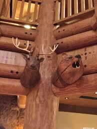 disney u0027s villas at wilderness lodge photos