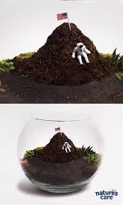 10 best dirt mound terrariums images on pinterest terraria