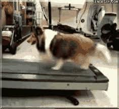 Treadmill Meme - señor gif treadmill great gifs funny gifs cheezburger