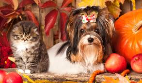 pet safety during thanksgiving activities pets in need of