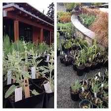 In House Plant 2017 Spring Plant Sale Horticulture Centre Of The Pacific