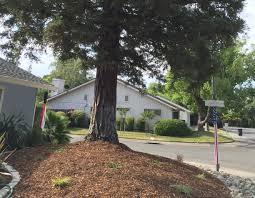 non native plants in california trees u0026 drought in california faqs california releaf