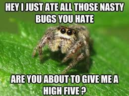 Shower Spider Meme - just killed a spider as i took a shower this post is in memoriam
