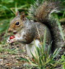 squirrels love fruit my beautiful world
