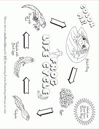 life cycle of a flower coloring sheets plant life cycle coloring