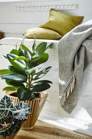best indoor house plant best indoor house plants low maintenance plants lovell homes