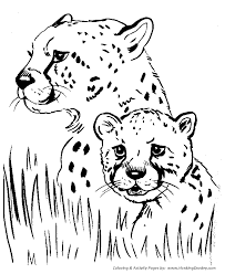 beautiful cheetah coloring 32 free colouring pages