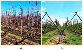 robotics free full text automated detection of branch shaking