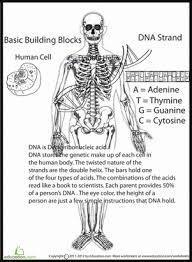 genetics basics biology worksheets education