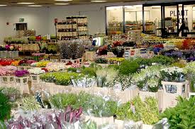 flower wholesale alinaozugikefik may flowers alabama