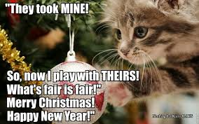 Cute Christmas Meme - cat a logs cat giggl christmas memes christmas pet christmas kitty