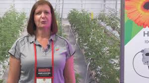 p l light systems the future of grow lighting youtube