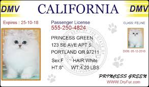 Business Card Luggage Tags Laminated Laminated Kennel Luggage Tag Iron Sealable Dryfur Pet