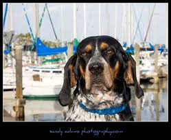 bluetick coonhound terrier mix the pet palace sandy adams