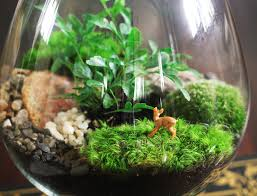 terrarium design astonishing terrarium garden closed terrarium