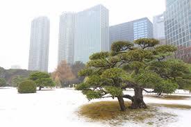 file hama rikyū garden in winter tokyo japan dsc09535 jpg