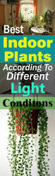 Best Plants For No Sunlight Best Indoor Plants According To Different Light Conditions