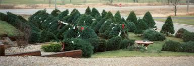 fisher christmas trees of north iowa
