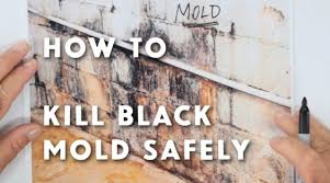 How To Clean Mold In Bathroom Toxic Black Mold Symptoms Test Removal U0026 Health Effects
