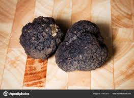 italian truffles a pair of precious black italian truffles stock photo cividins