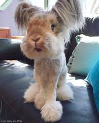adorable fluffy eared rabbit looks like a living doll